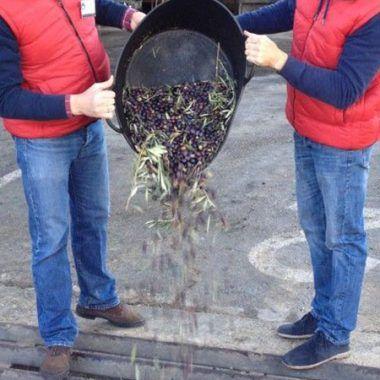 bringing olives
